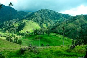 Andean Valley and Mountains, Cocora valley landscape of Quindio