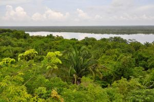 foresta pluviale in belize