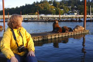 astoria oregon sea lions